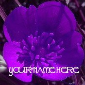 Ebay Store Logo Purple Flower Dress Up your Ebay Store Add your Store Name!!