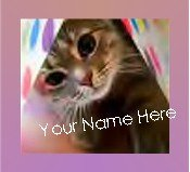 Ebay Store Logo Playful Kitten Pink Border Flower Dress Up your Ebay Store Add your Store Name!!