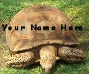 Ebay Store Logo Turtle Tortoise Green Dress Up your Ebay Store Add your Store Name!!