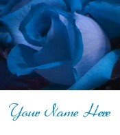 Ecrater Store Logo & HomePage Image Blue Rose Dress Up your Ecrater Store Add your Name!