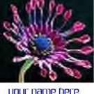 Ecrater Store Logo & HomePage Image Pink Cactus Flower Dress Up your Ecrater Store Add your Name!