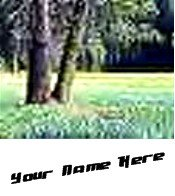 Ecrater Store Logo & HomePage Image Green Trees Forest Dress Up your Ecrater Store Add your Name!