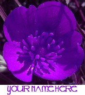 Ecrater Store Logo & HomePage Image Purple Flower Dress Up your Ecrater Store!!