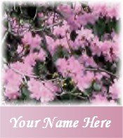 Ecrater Store Logo & HomePage Image Pink Azalea flowers Dress Up your Ecrater Store!!