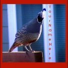 Ecrater Store Logo & HomePage Image Red Gray Quail Bird Dress Up your Ecrater Store!!