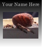 Ecrater Store Logo & HomePage Image Creepy Red Spider Dress Up your Ecrater Store!!
