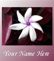 Ecrater Store Logo & HomePage Image White Flower Pink Border Dress Up your Ecrater Store!!