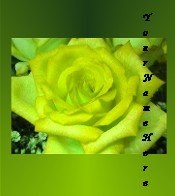 Ecrater Store Logo & HomePage Image Yellow Green Rose Flower  Dress Up your Ecrater Store!!