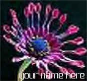 Neoloch.com Store Banner and Logo Combo Pink Blue Cactus Flower Add your Store Name!
