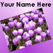 Neoloch.com Store Banner and Logo Combo Purple Tulips Flowers Add your Store Name!