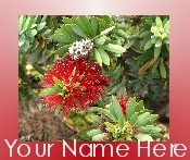Neoloch.com Store Banner and Logo Combo Red White Green Hawaiian Flower Add your Store Name!