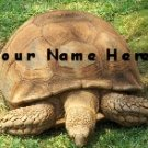 Neoloch.com Store Banner and Logo Combo Turtle Tortoise Green Add your Store Name!