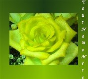 Neoloch.com Store Banner and Logo Combo Yellow Green Rose Flower Add your Store Name!