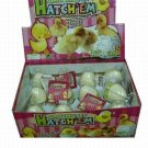 12 Hatchem Duck Eggs
