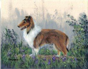 Farm Collie Painting