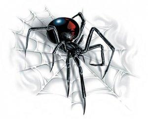 SPIDER STICKER - RARE NEW BLACK WIDOW Decal