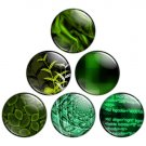 Green & Black Color Themed 1.25 inch Pinback Button Badge Set