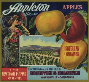 APPLETON 4 TIER NEWTOWN PIPPINS APPLE CRATE LABEL