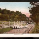 ca 1900 POSTCARD A NEW ENGLAND COUNTRY ROAD WITH WANDERING SHEEP & FARMER
