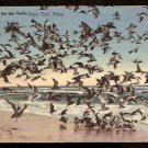1944 POSTCARD DINNER TIME FOR THE GULLS CAPE COD MASS. MA