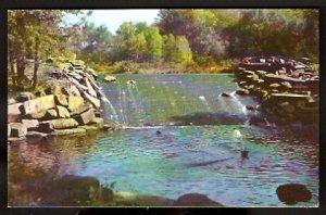 ca 1950/1960 FOREST PARK DAM & FOUNTAIN SPRINGFIELD MA