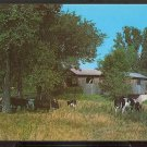 Ca 1960 COWS GRAZING COVERED BRIDGE NORTH FERRISBURG ADDISON COUNTY VERMONT 797