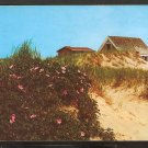 1978 SHACK ON THE CAPE COD DUNES WITH WILD ROSES 887