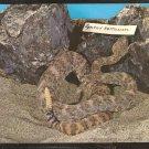 Speckled Rattlesnake In His Habitat 974