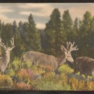 1938 3 Deer in a Rocky Mountains Colorado Meadow 972