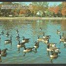 Canadian Geese in Pond Dannemora New York Adirondack Mountains Chrome Postcard 51