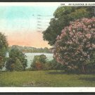 A Lakeside Oleander In Bloom In Florida 1929 White Border Postcard 1088