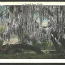 A Tropical Florida Scene Cabin Trees Spanish Moss White Border Postcard 1107