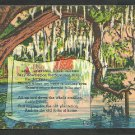 Suwannee River Florida Swamp Trees Spanish Moss Linen Postcard 1151