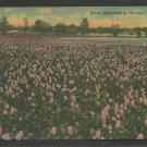 A Field of Water Hyacinths In Florida Linen Postcard 1152
