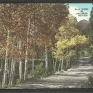 Stunning Autumn Foliage In the Colorado Rockies On A Country Road Lined With Birch Trees 1157