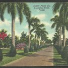 Stately Royal Palms & Australian Pines Lining A Quiet Florida Roadway Linen Postcard 1178