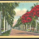 First Street Fort Myers Florida Lined With Royal Poinciana and Majestic Royal Palm Trees Linen