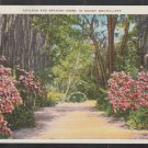 Azaleas Spanish Moss Lining a Dirt Path in the Sunny South White Border Postcard 1241