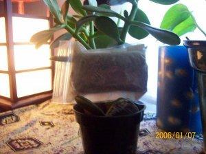 Herbal Bath Tea-Relaxing