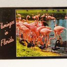 Pink Flamingos in Florida with black swans ducks postcard CurteichColor unused 1568vf