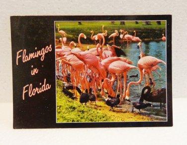 Pink Flamingos in Florida with black swans ducks postcard CurteichColor unused 1568vf