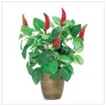 Chili Pepper Plant in Pot #36719