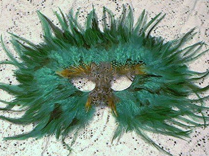GREEN FEATHER MASK MASQUERADE MARDI GRAS