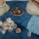 Mermaid Oracle Shells