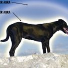Aura Energy Readings - Pets Auras