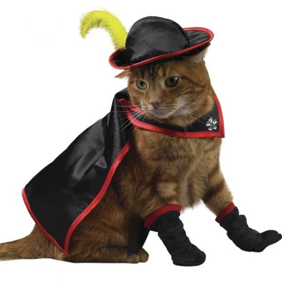 LARGE Savvy Tabby Kitty Crusader Adorable Pet Costume Cat Halloween