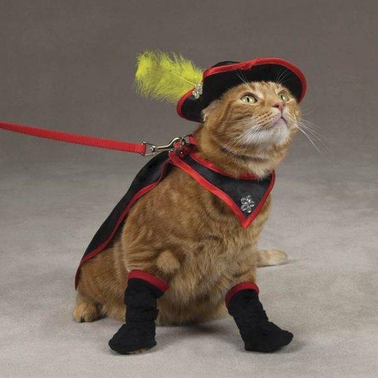 MEDIUM Savvy Tabby Kitty Crusader Adorable Pet Costume Cat Halloween