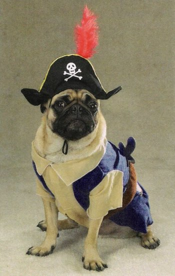 X-LARGE Pirate Pup Halloween Pet Costume Dog Ahoy Matey