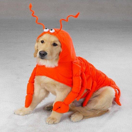 MEDIUM Lobster Paws Pet Halloween Dog Costume