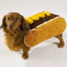 MEDIUM Hot Diggity Dog Halloween Pet Costume Ketchup or Mustard